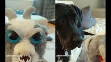 Kid Jay - Freaky Face Changing Stuffed Animal Scares Dog