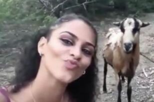 Girl Taking A Selfie With A Goat Almost Gets Headbutted