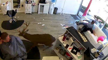 Weird News - Surveillance Video Shows Deer Smash Through Hair Salon Window