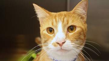 None - LCHS Pet of the Week: J. Mitch