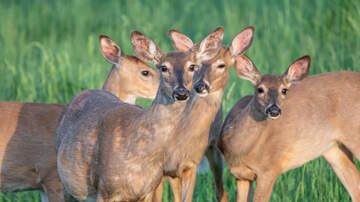 The Big Show - The worst month for car-deer collisions