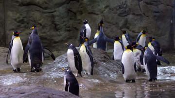 Deej - San Diego Zoo Penguins Get Reality Show