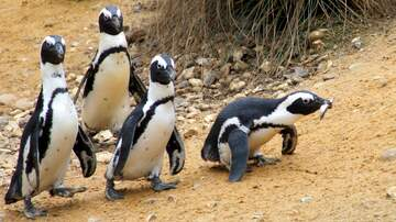 Woody Johnson - San Diego Zoo Penguins Are Getting Their Own Reality Show