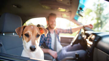 None - Uber Adds New Feature For Animal Lovers Traveling With Pets