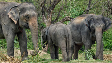 John Carrington Blog (57423) - SIX ELEPHANTS DIE AT WATERFALL WHILE TRYING TO RESCUE THEIR BABY ELEPHANT