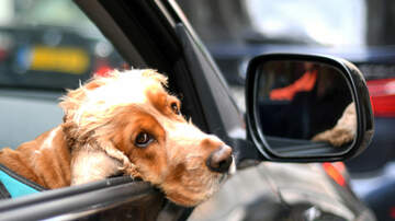 Sisanie - Uber's New Feature Allows For Traveling With Pets