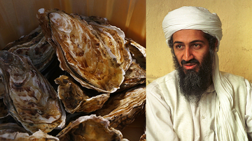 Weird News - Woman Finds Shell That Looks Exactly Like Osama Bin Laden