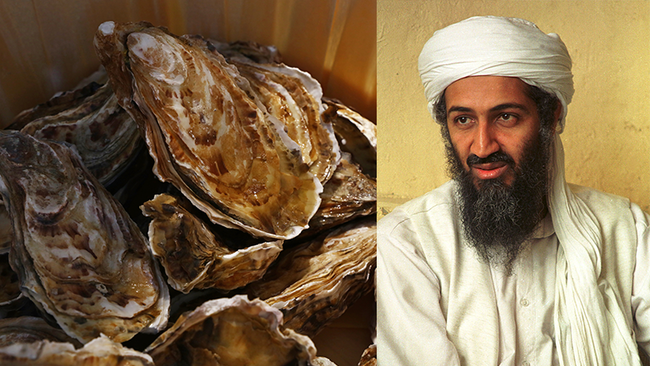 Woman Finds Shell That Looks Exactly Like Osama Bin Laden
