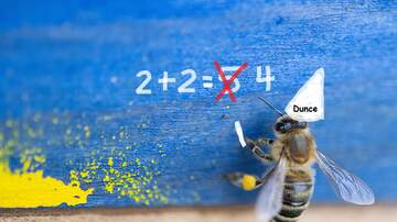 Chris Marino - Want Your Kids to Get Better at Math? Punish Them for Wrong Answers (???)