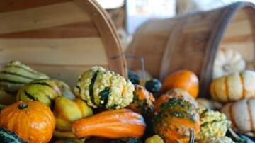 Steve & Gina's Page -  Ugly gourds and warty pumpkins are all the rage this Halloween season