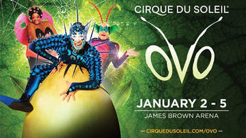 None - Cirque du Soleil Presents: OVO