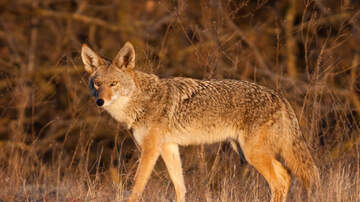 Sarah the Web Girl - Ramapo Valley County Reservation Reopens after Coyote Attack