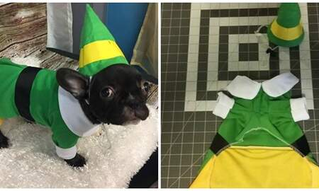 Mathew & Priscilla In The Morning - You Can Now Dress Your Dog As Buddy The Elf For Halloween