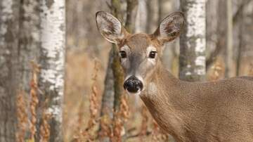 Local News - Feds Want The Town Of Dewitt To Do More Regarding Deer