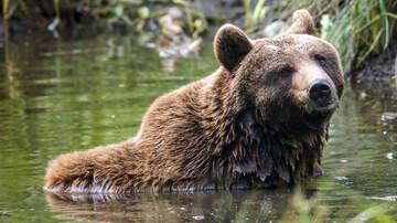 Zann - Guy Wrestles Brown Bear (Video)