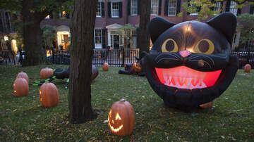 Josh Michael - This House Has 218 Halloween Inflatables