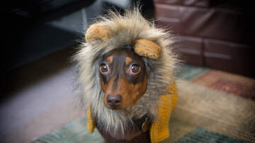 All Things Savannah - Wag-O-Ween is back!