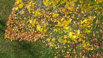 Chris Marino - Raking Leaves Is for Suckers! This Easier Option Is Better for Your Lawn
