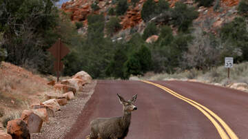 DZL - AAA predicting a record number of deer collisions over Thanksgiving