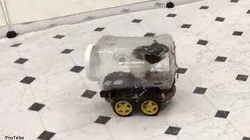 Coast to Coast AM with George Noory - Watch: Rats Taught to Drive Tiny Cars