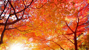 Sarah the Web Girl - The Best Spots in New Jersey to See Peak Fall Foliage