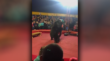 Weird, Odd and Bizarre News - Bear Attacks Circus Trainer During Show in Russia
