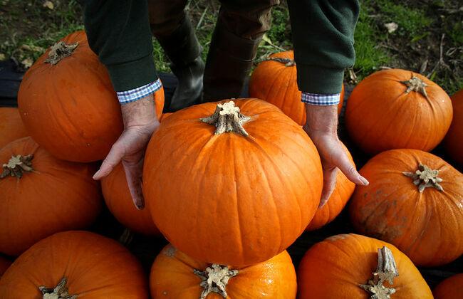 Halloween Preparation At A Pumpkin Farm