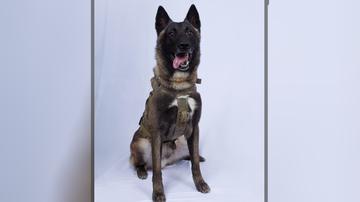 Politics - Trump Declassifies Photo of Hero Dog Injured in al-Baghdadi Raid