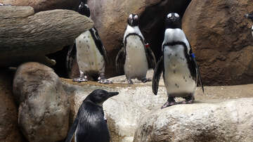 Lori - Woman's Perfect Selfie Ruined By Fornicating Penguins