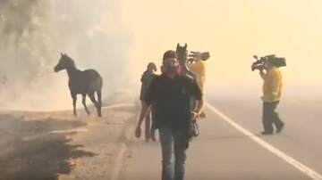 Tige and Daniel - Horse Goes Back Through Wildfire To Find Family