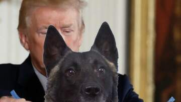 South Florida's First News w Jimmy Cefalo - President Trump Tweets Doctored Image of Hero Military K-9