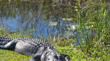Florida News - Florida Saves 20-Thousand Acres In Everglades From Oil Drilling