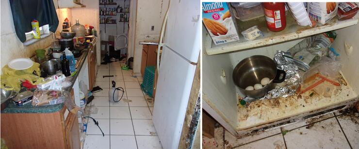 Child and 17 dogs found living at Louisiana home with