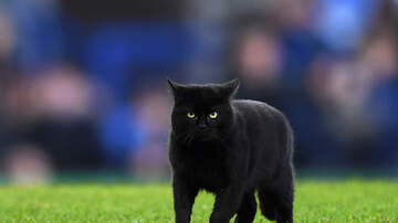 Ashley Nics - Black Cat Runs On Football Field During NY Giants vs Dallas Cowboys Game