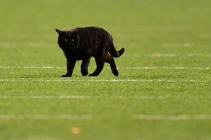 Black Cat Invades Monday Night Football