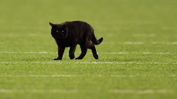 Eddie - Black Cat Invades Monday Night Football