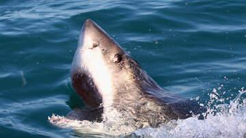 Bill Reed - Man Jumps Off Surfboard- Lands On Shark!!