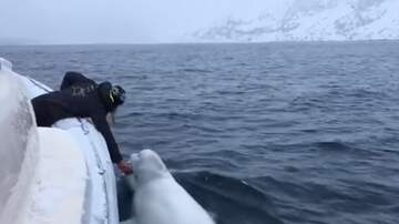 Harms - Just Another Video of a Person Playing Fetch with a Whale
