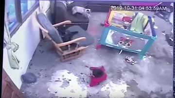 Weird, Odd and Bizarre News - Hero Cat Saves Baby From Falling Down Stairs In Heart-Stopping Video