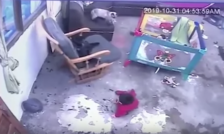 Weird News - Hero Cat Saves Baby From Falling Down Stairs In Heart-Stopping Video