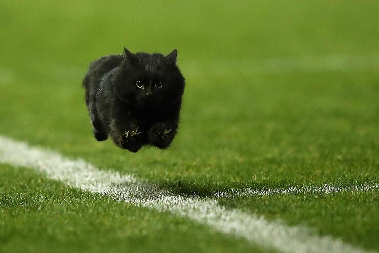 NRL Rd 18 - Panthers v Sharks