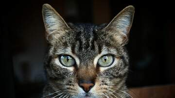 Sarah the Web Girl - Blairstown Family Finds Missing Cat Hiding Inside Home