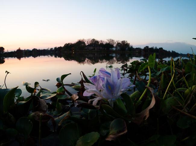 LSU lake