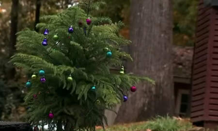 National News - Neighbors Fed Up With Pothole Fill It With A Christmas Tree