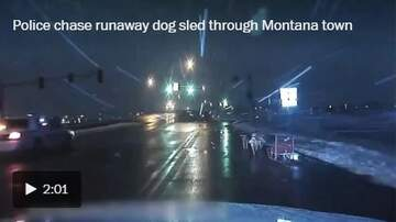 KC O'Dea Show - Meanwhile, In Montana:  Runaway Dog-Sled Police Chase Video!