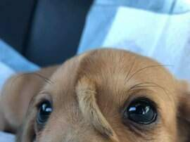 None - Meet Narwhal, the Puppy with a Tail Coming Out of His Forehead.