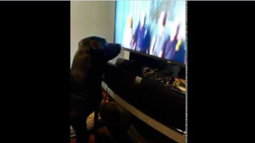 Johnjay And Rich - WATCH: Dog Gets Annoyed When TV Show is Paused