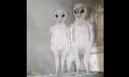 Weird News - Builders Film What They Claim Are Aliens But It's Nothing Unworldly