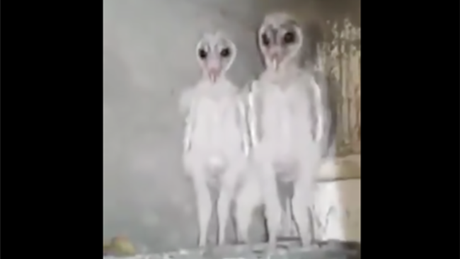 Builders Film What They Claim Are Aliens But It's Nothing Unworldly