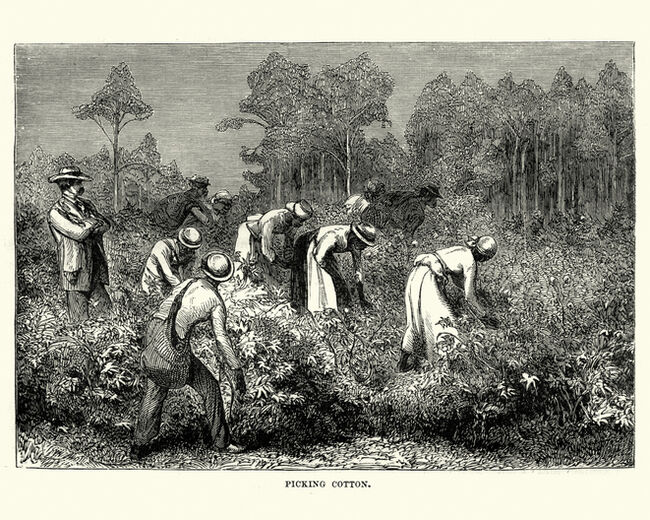 Workers picking cotton, Louisiana, 19th Century